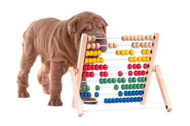 dog-abacus