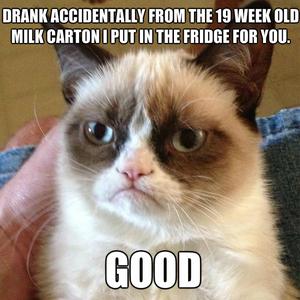 grumpy-cat-old-milk_fb_2225241